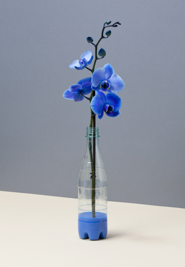 'Orchidee'