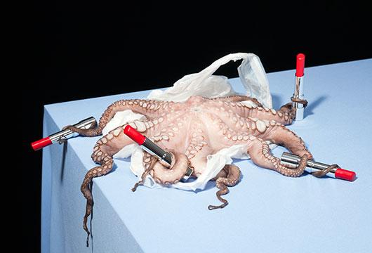 'Octopus' (2019)